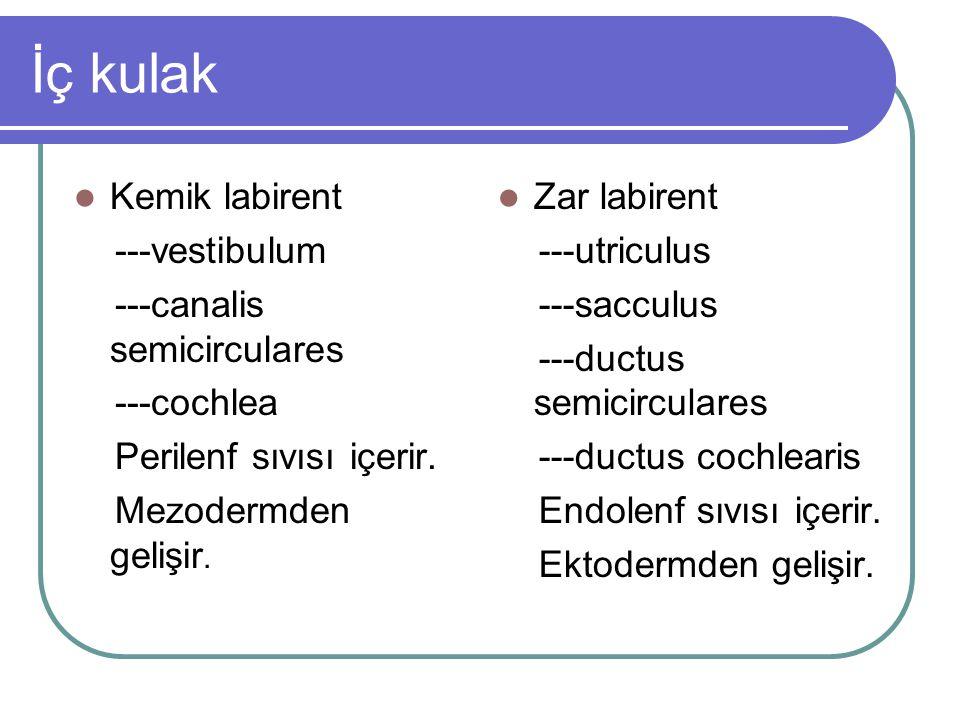 İç kulak Kemik labirent ---vestibulum ---canalis semicirculares