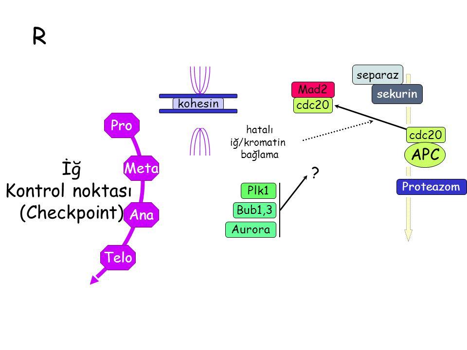 R İğ Kontrol noktası (Checkpoint) APC Pro Meta Ana Telo separaz Mad2