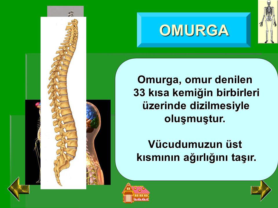 OMURGA Omurga, omur denilen 33 kısa kemiğin birbirleri