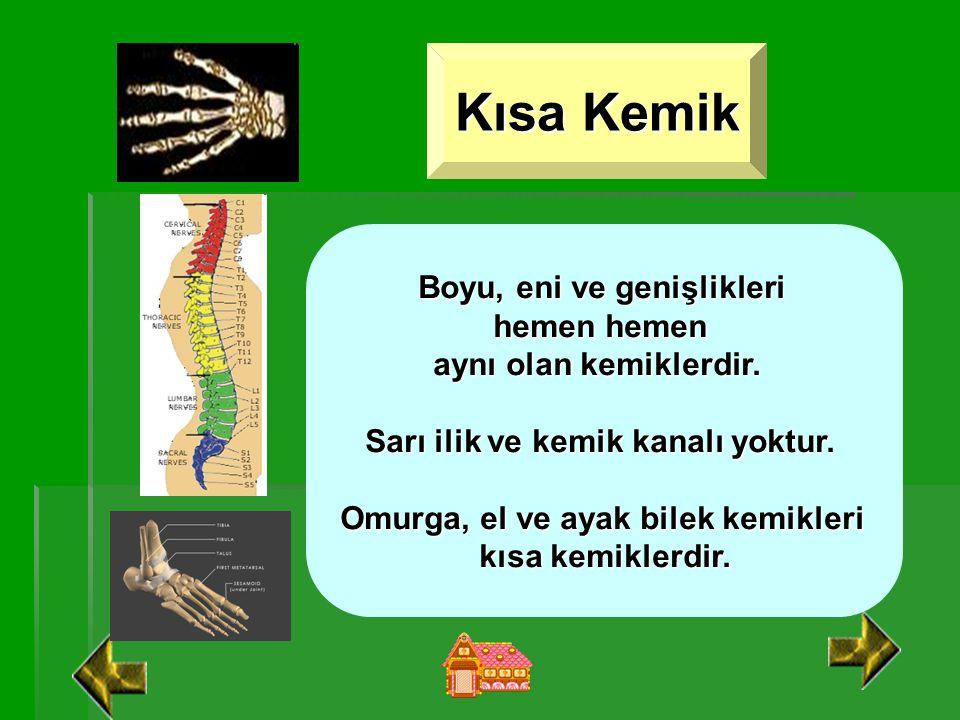Kısa Kemik Boyu, eni ve genişlikleri hemen hemen