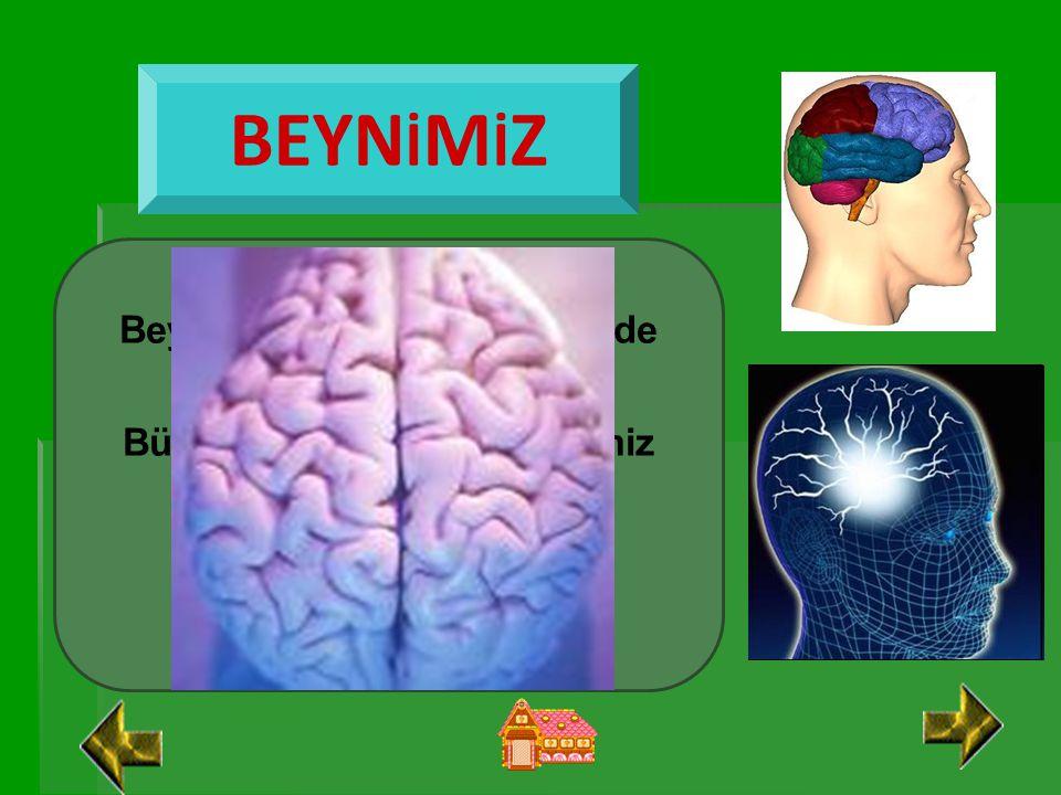 BEYNİMİZ Beynimiz kafatasımızın içinde bulunur.