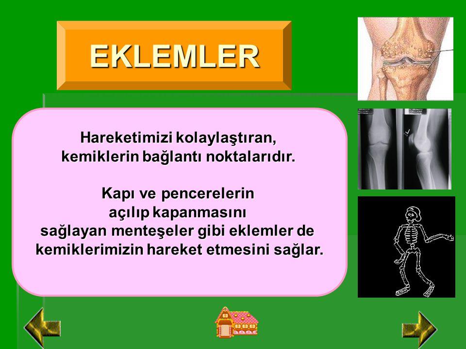 EKLEMLER Hareketimizi kolaylaştıran, kemiklerin bağlantı noktalarıdır.