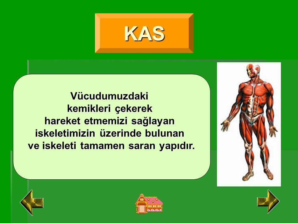 KAS Vücudumuzdaki kemikleri çekerek hareket etmemizi sağlayan