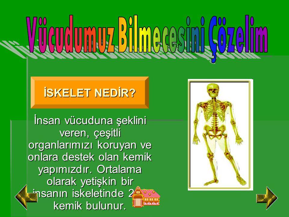 Vücudumuz Bilmecesini Çözelim