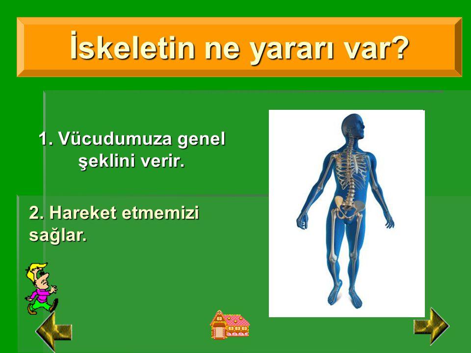 1. Vücudumuza genel şeklini verir.