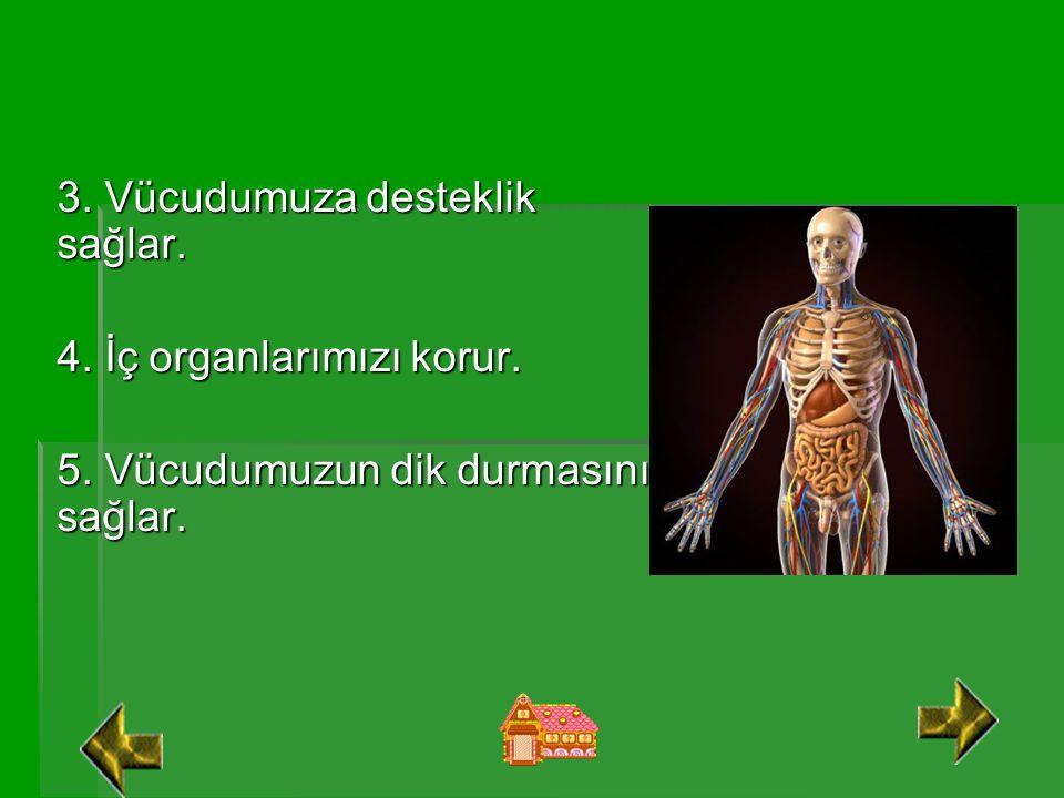 3. Vücudumuza desteklik sağlar.