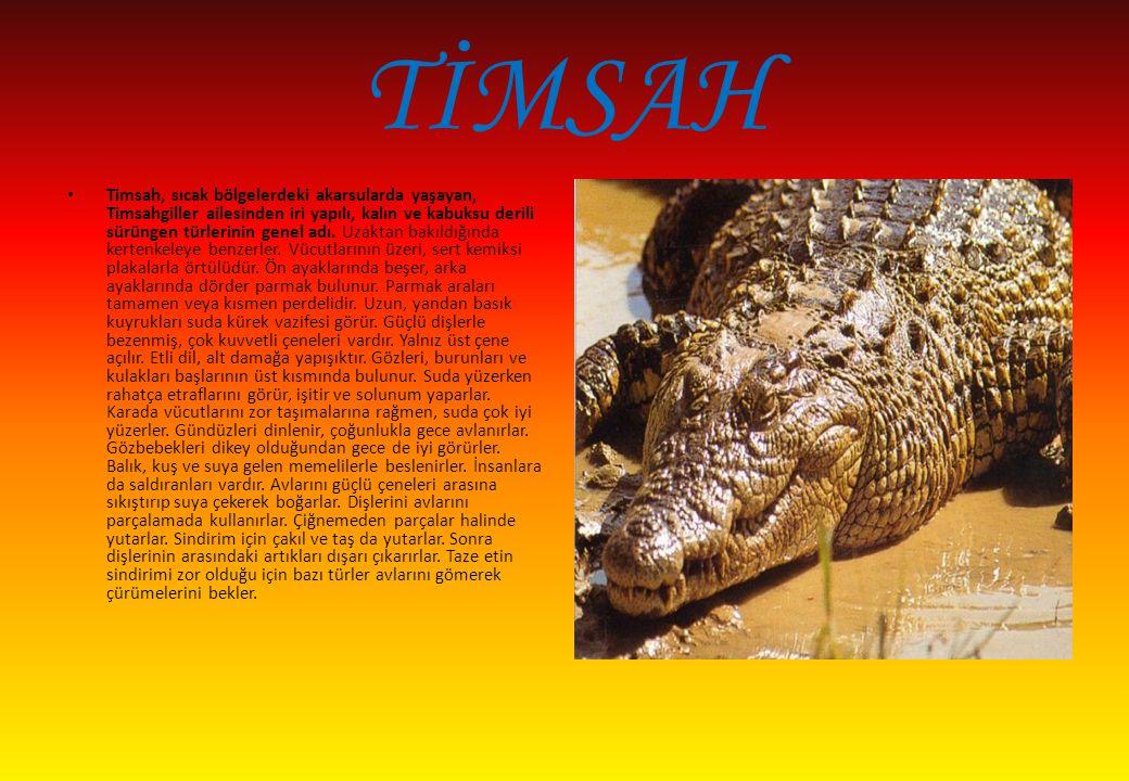 TİMSAH