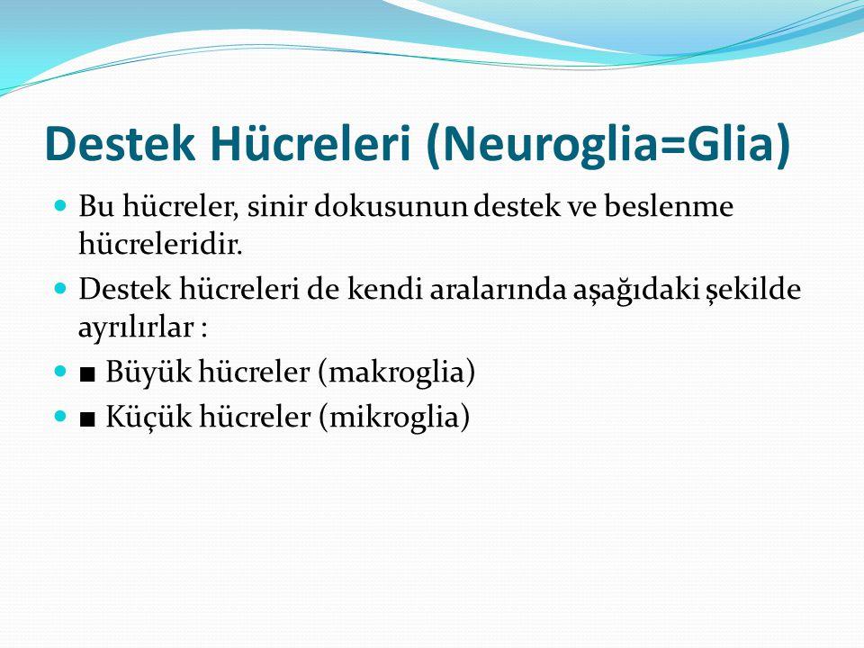 Destek Hücreleri (Neuroglia=Glia)