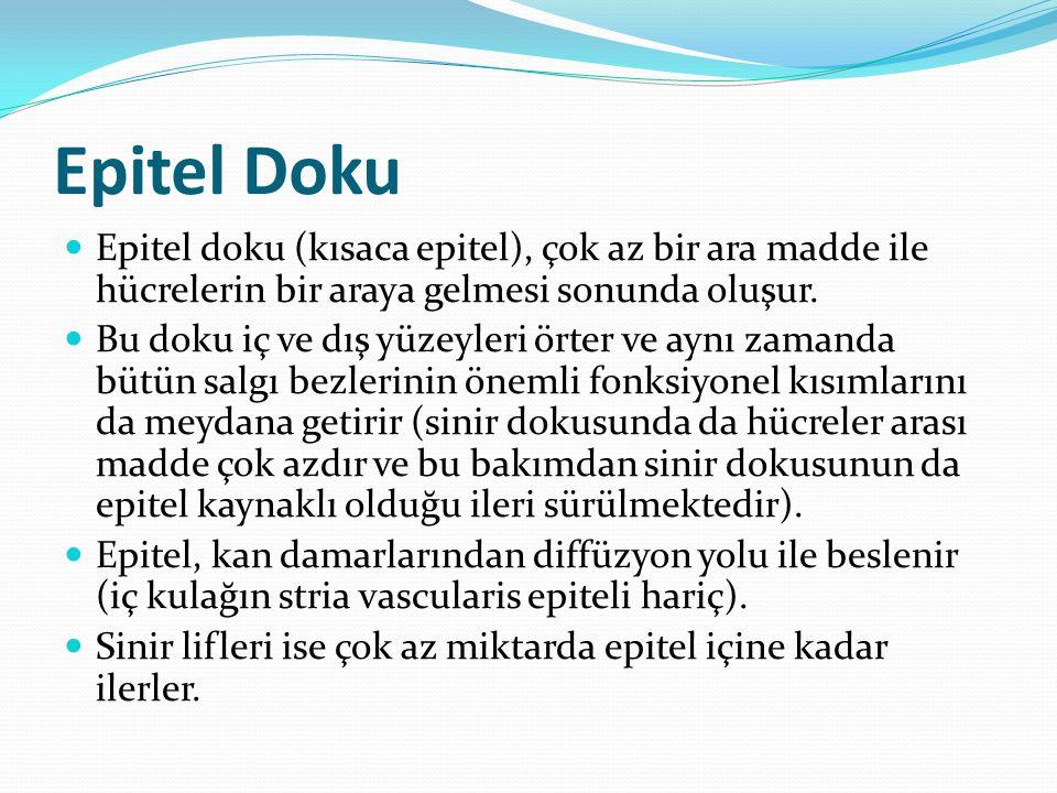 Epitel Doku Epitel doku (kısaca epitel), çok az bir ara madde ile hücrelerin bir araya gelmesi sonunda oluşur.