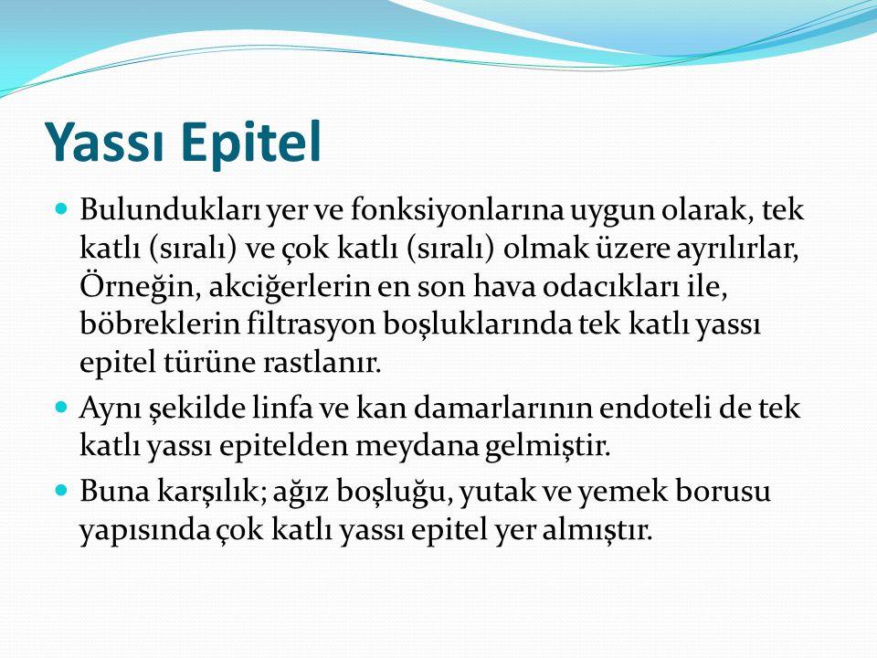Yassı Epitel