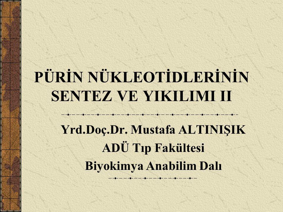 PÜRİN NÜKLEOTİDLERİNİN SENTEZ VE YIKILIMI II