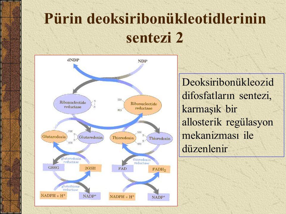 Pürin deoksiribonükleotidlerinin sentezi 2