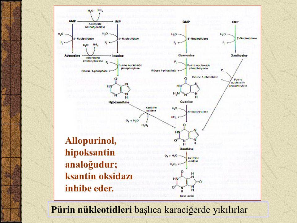 Allopurinol, hipoksantin analoğudur; ksantin oksidazı inhibe eder.