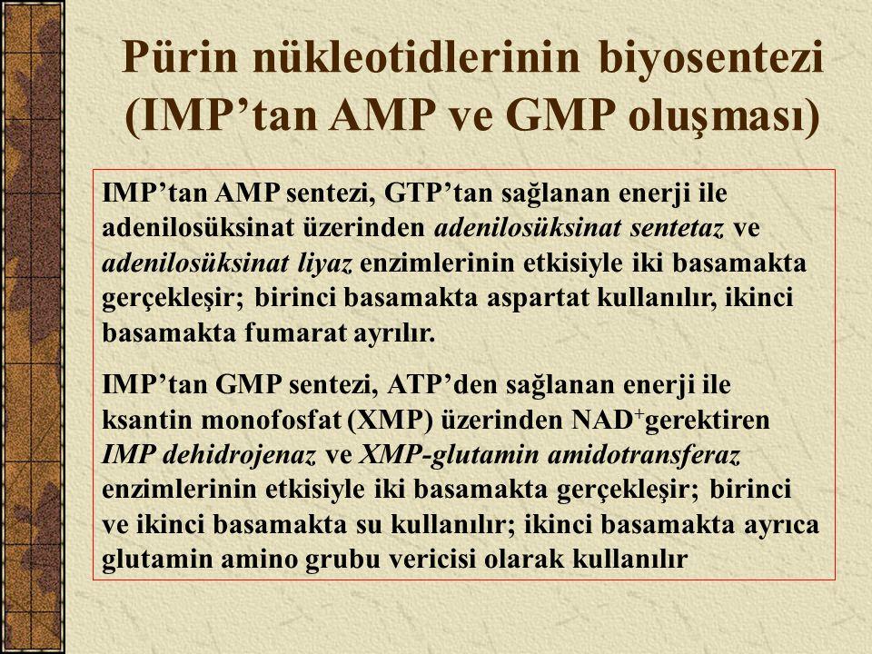 Pürin nükleotidlerinin biyosentezi (IMP'tan AMP ve GMP oluşması)