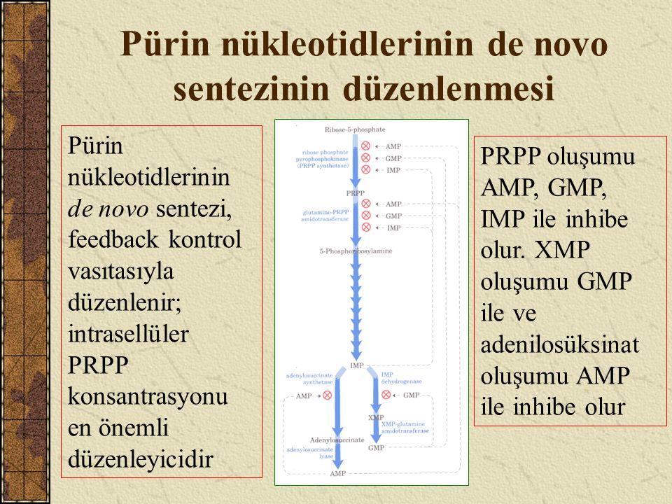 Pürin nükleotidlerinin de novo sentezinin düzenlenmesi