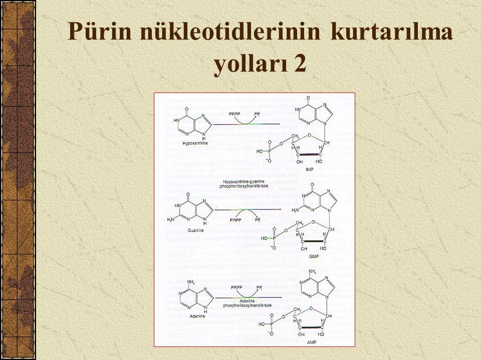 Pürin nükleotidlerinin kurtarılma yolları 2
