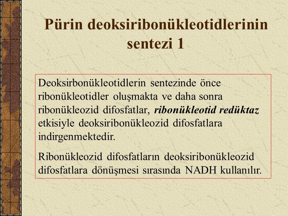 Pürin deoksiribonükleotidlerinin sentezi 1