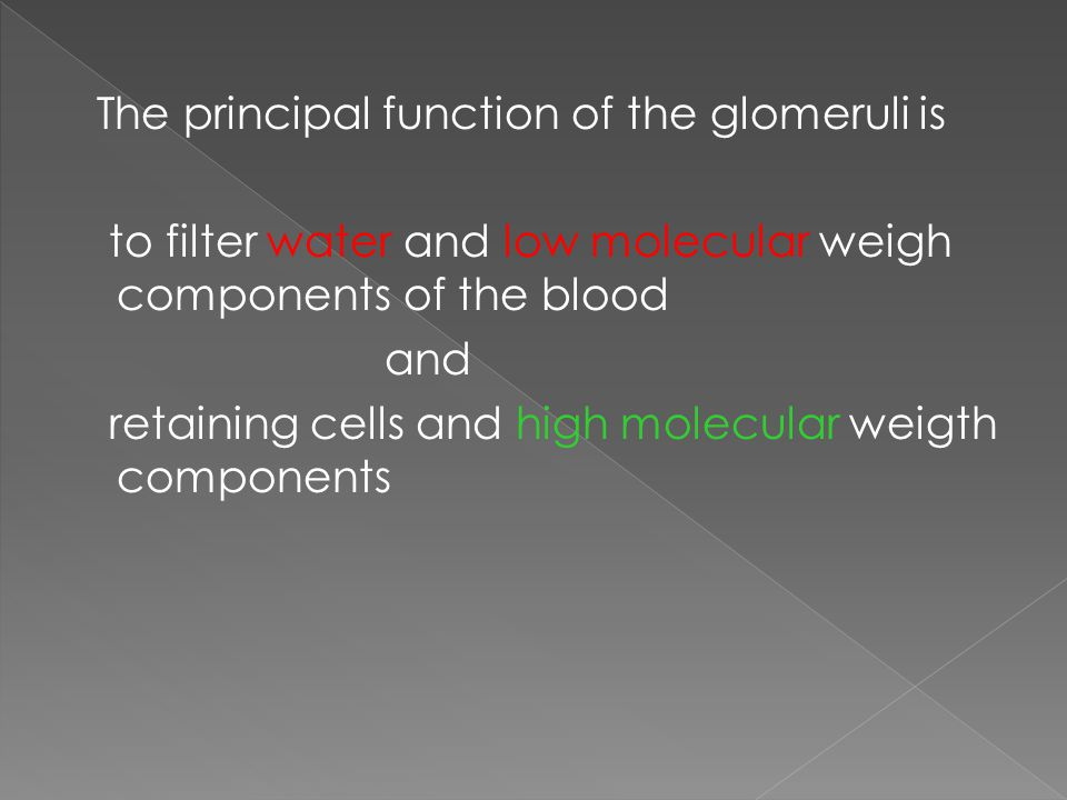 The principal function of the glomeruli is to filter water and low molecular weigh components of the blood and retaining cells and high molecular weigth components