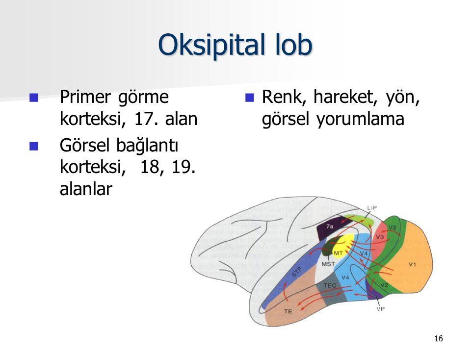 Oksipital lob Primer görme korteksi, 17. alan