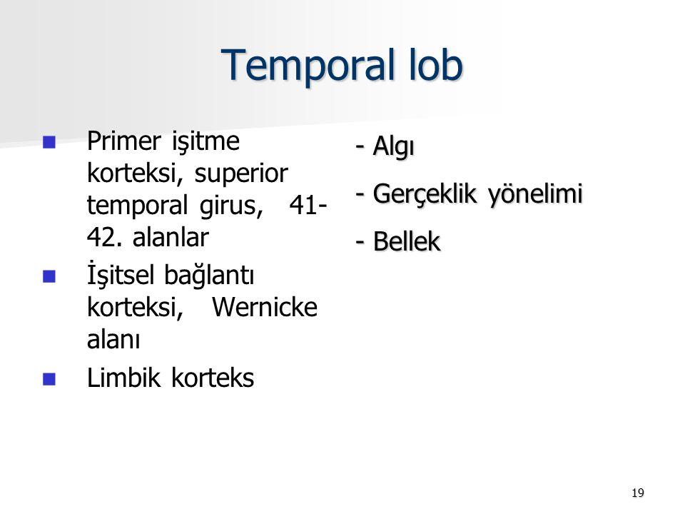 Temporal lob Primer işitme korteksi, superior temporal girus, 41- 42. alanlar. İşitsel bağlantı korteksi, Wernicke alanı.