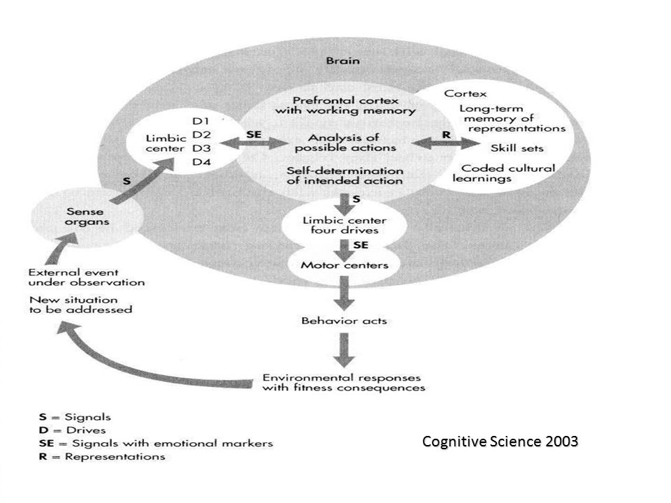Cognitive Science 2003