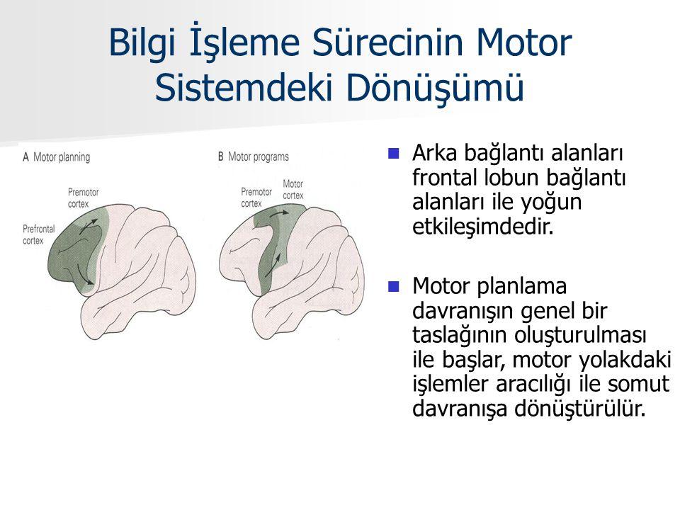 Bilgi İşleme Sürecinin Motor Sistemdeki Dönüşümü