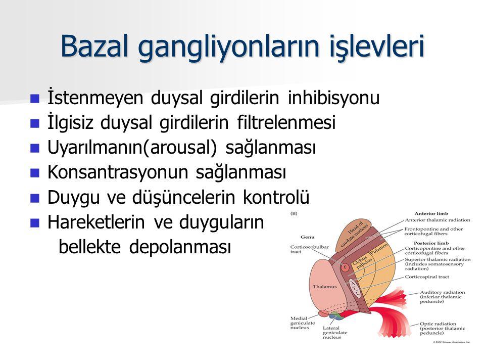 Bazal gangliyonların işlevleri