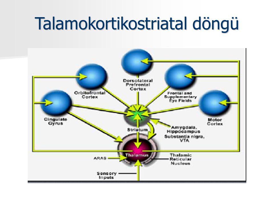 Talamokortikostriatal döngü
