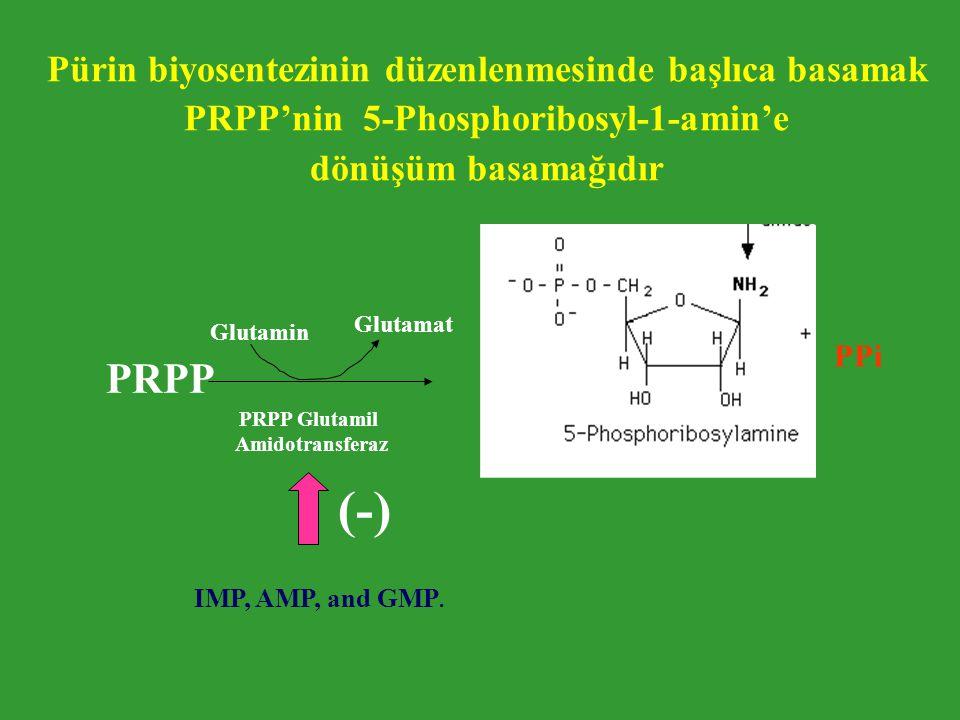 (-) PRPP Pürin biyosentezinin düzenlenmesinde başlıca basamak