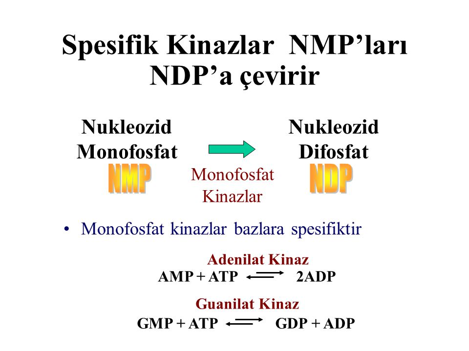 Spesifik Kinazlar NMP'ları NDP'a çevirir