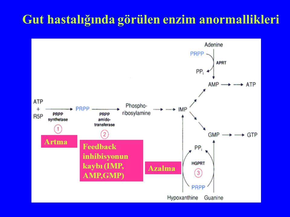 Gut hastalığında görülen enzim anormallikleri