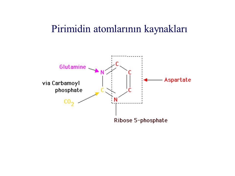 Pirimidin atomlarının kaynakları