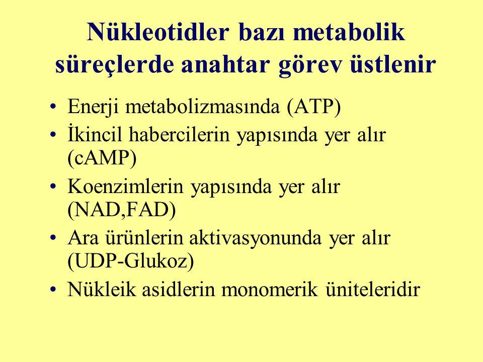 Nükleotidler bazı metabolik süreçlerde anahtar görev üstlenir