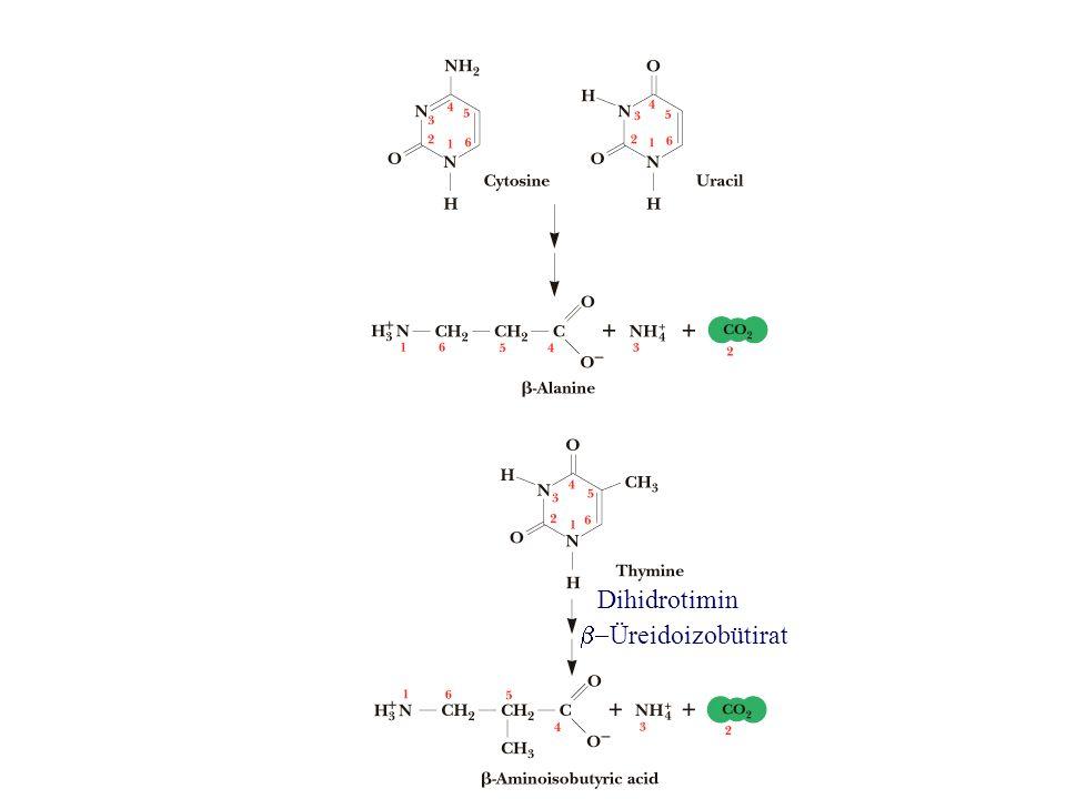 Dihidrotimin b-Üreidoizobütirat