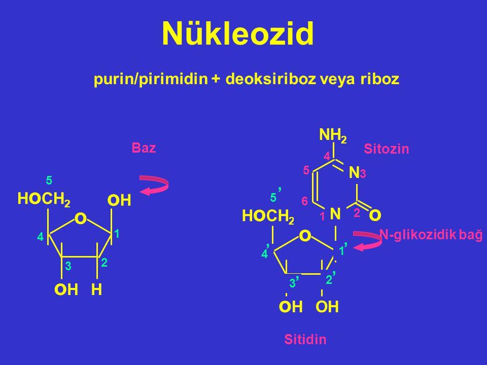 Nükleozid oH o o oH purin/pirimidin + deoksiriboz veya riboz NH2 '