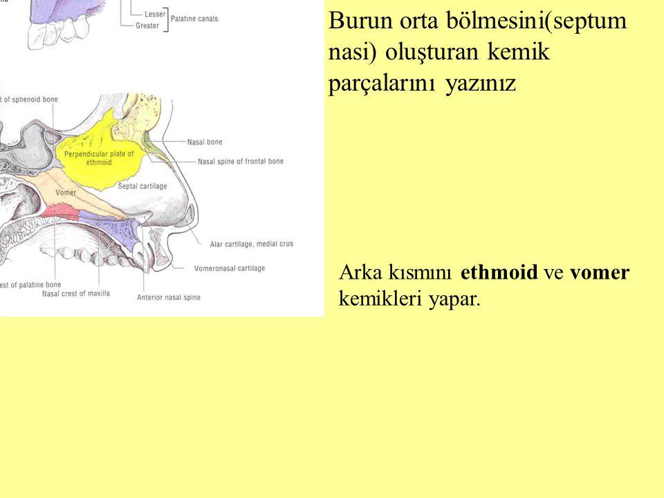 Burun orta bölmesini(septum nasi) oluşturan kemik parçalarını yazınız