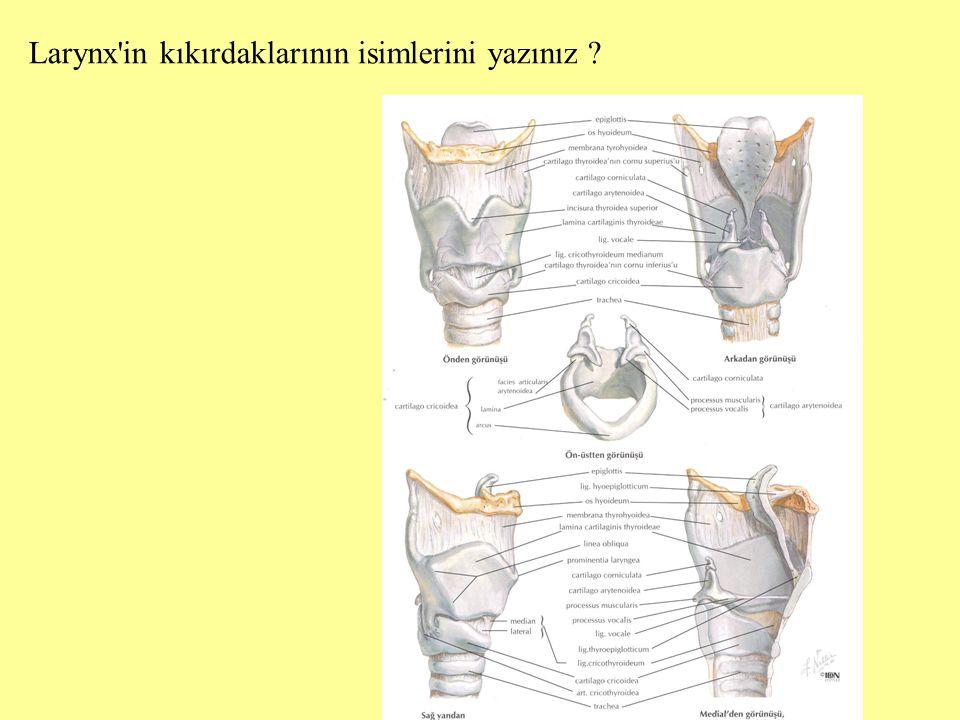 Larynx in kıkırdaklarının isimlerini yazınız