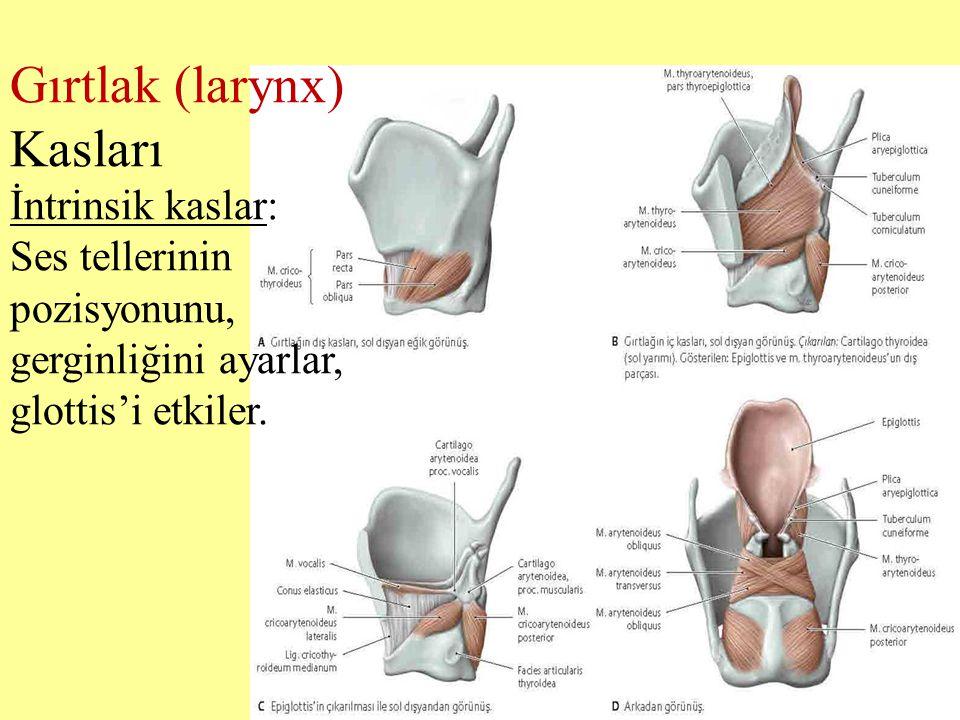 Gırtlak (larynx) Kasları İntrinsik kaslar: