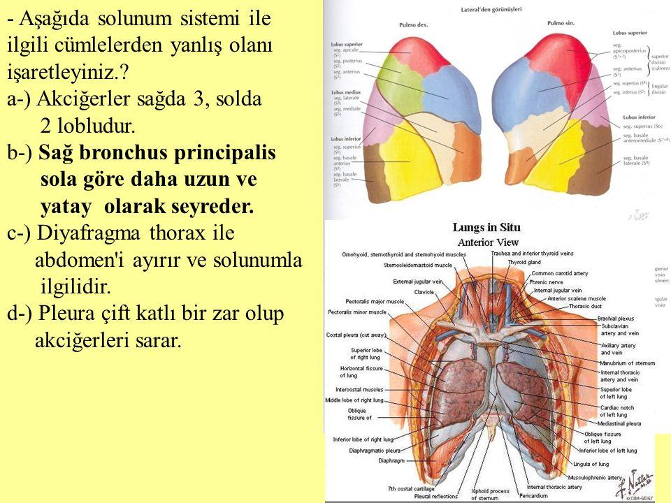 - Aşağıda solunum sistemi ile ilgili cümlelerden yanlış olanı işaretleyiniz.