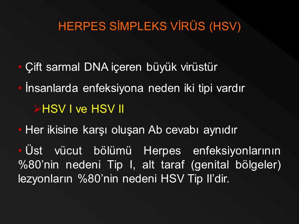 HERPES SİMPLEKS VİRÜS (HSV)