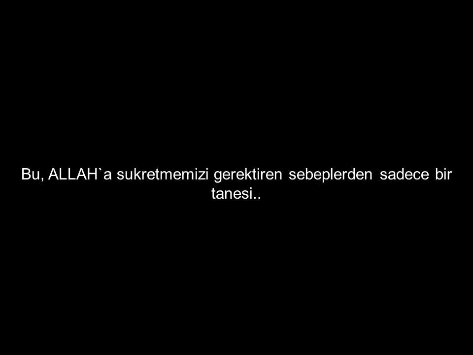 Bu, ALLAH`a sukretmemizi gerektiren sebeplerden sadece bir tanesi..