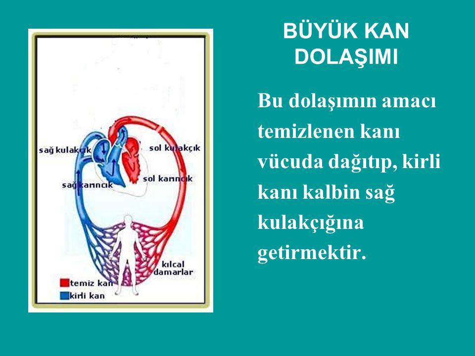 BÜYÜK KAN DOLAŞIMI Bu dolaşımın amacı. temizlenen kanı. vücuda dağıtıp, kirli. kanı kalbin sağ. kulakçığına.