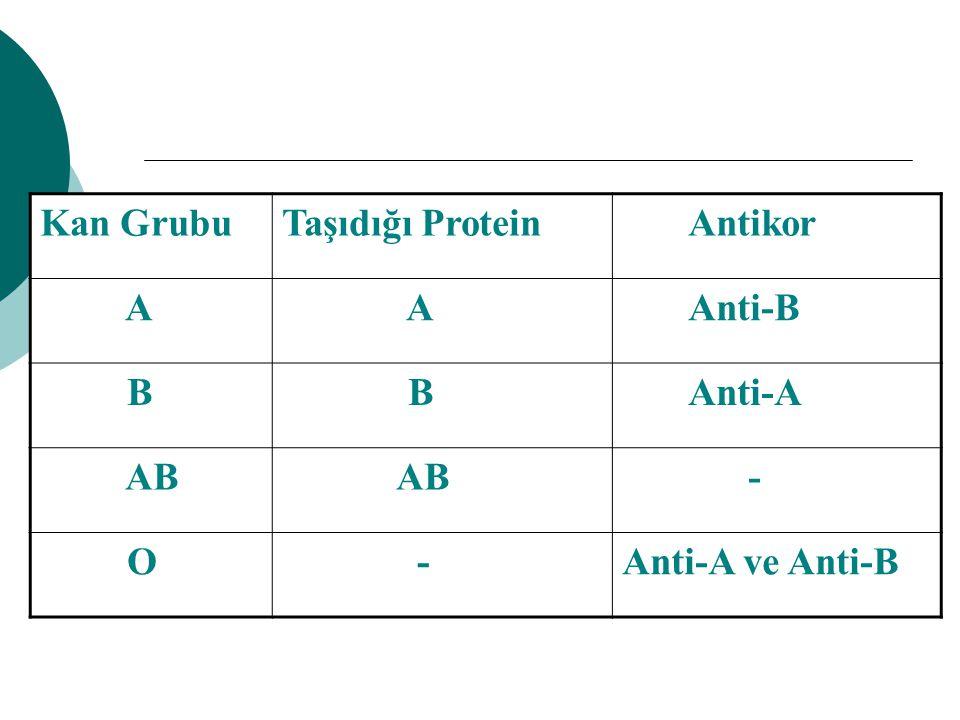 Kan Grubu Taşıdığı Protein Antikor A Anti-B B Anti-A AB - O Anti-A ve Anti-B