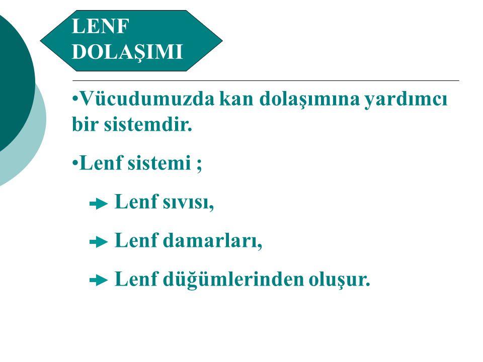 LENF DOLAŞIMI Vücudumuzda kan dolaşımına yardımcı bir sistemdir. Lenf sistemi ; Lenf sıvısı, Lenf damarları,