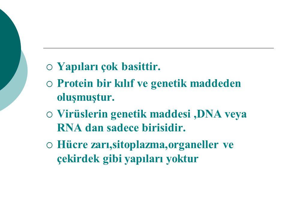 Yapıları çok basittir. Protein bir kılıf ve genetik maddeden oluşmuştur. Virüslerin genetik maddesi ,DNA veya RNA dan sadece birisidir.