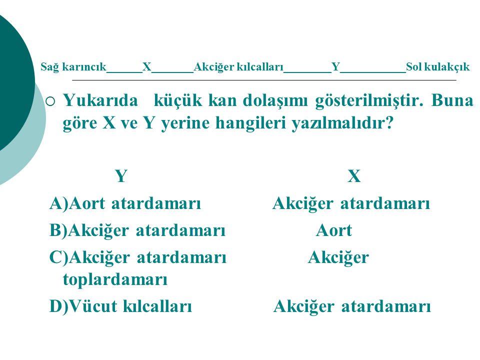 A)Aort atardamarı Akciğer atardamarı B)Akciğer atardamarı Aort