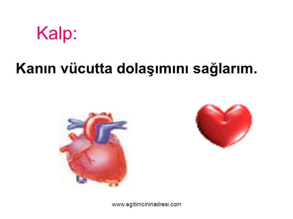 Kalp: Kanın vücutta dolaşımını sağlarım. www.egitimcininadresi.com