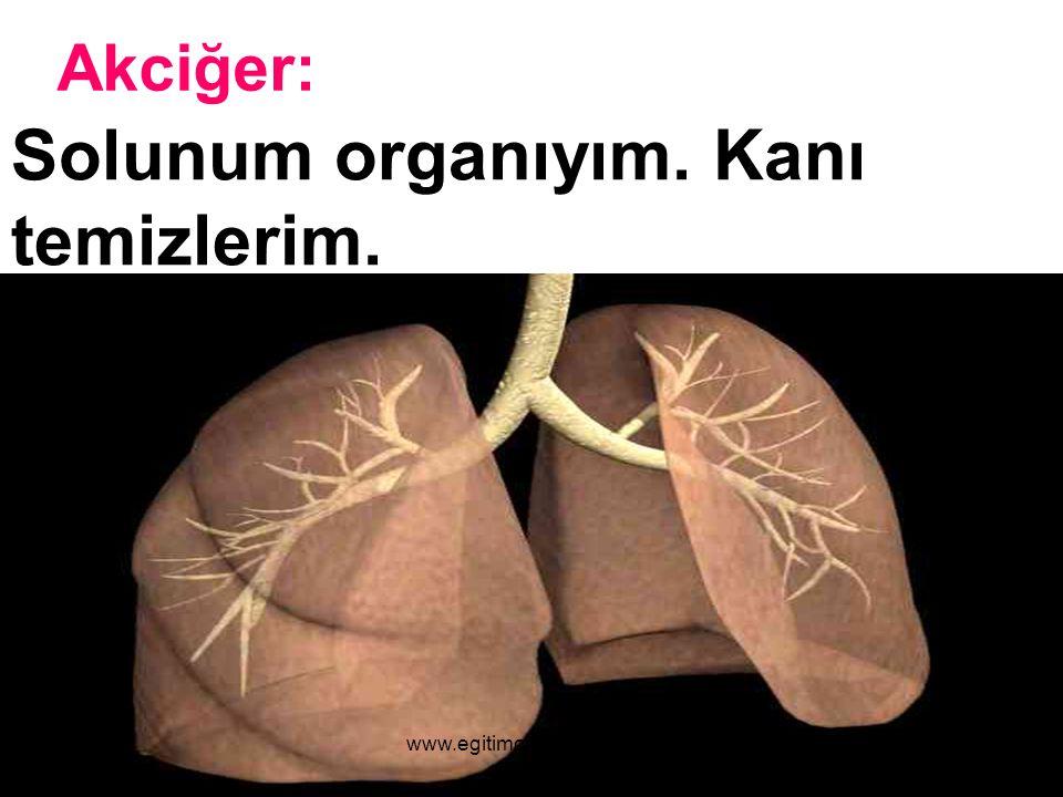 Solunum organıyım. Kanı temizlerim.