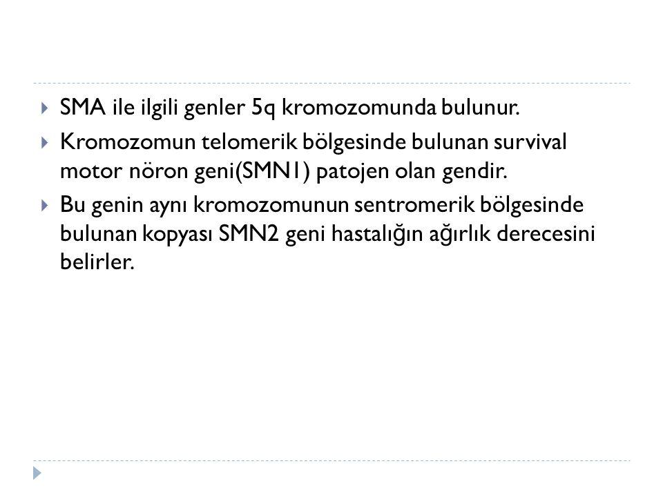 SMA ile ilgili genler 5q kromozomunda bulunur.