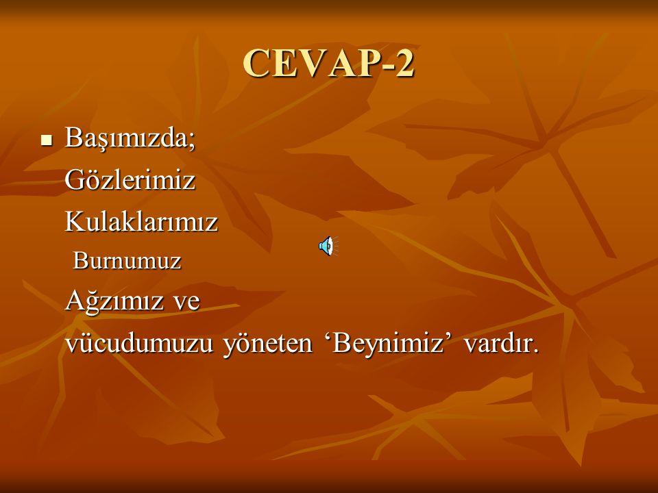 CEVAP-2 Başımızda; Gözlerimiz Kulaklarımız Ağzımız ve